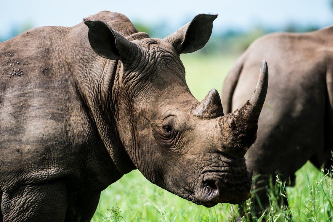 Wakacje w Dortmundzie – odwiedź miasto skrzydlatych nosorożców
